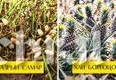 Бидний идэх дуртай жимс, ногоо хаана яаж ургадаг вэ?